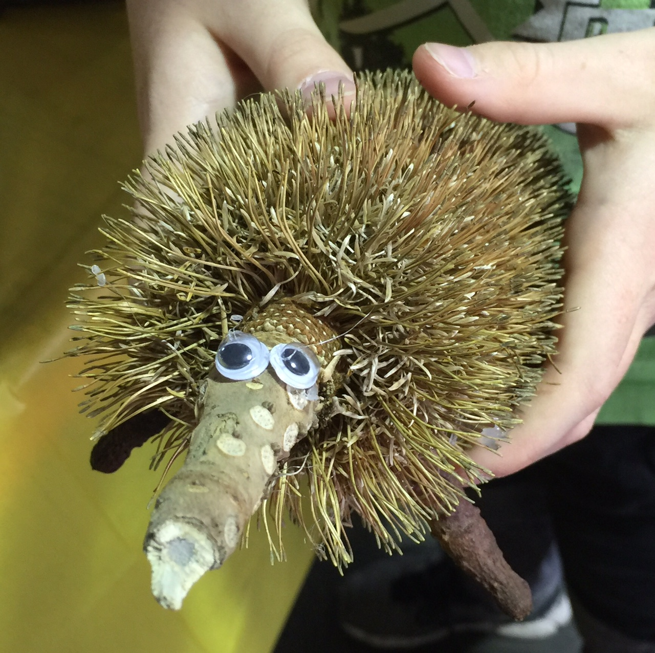 kids-nature-craft-echidna-banksia-seedpod-critter