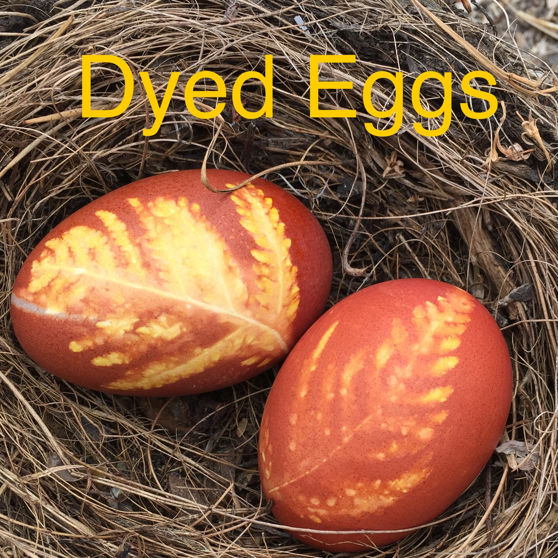 natural-dyed-eggs-nature-crafts